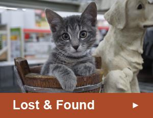 Lost and Found Button